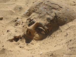wood coffin at Abydos